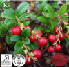 Natural Cranberry Extract Anthocyanidins 10%-30%, Proanthocyanidins 5%-60%