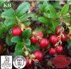Natural Cranberry Extract Anthocyanins 5%-25%, Anthocyanidins 25%-35%, Proanthocyanidins 5%-50%