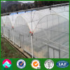 Commercial Multi-Span Plastic Film Greenhouse