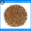 High Nutrition Dried Mealworms for Poultry Feed