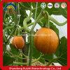 Shine Skin Pumpkin Seed Kernel Extract Grade a