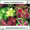 Hot Sale China Coleus Forskohlii Powder Extract with Forskolin 10%-98%