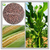 Agriculture Organic Fertilizer Granular Amino Acid Fertilizer with NPK