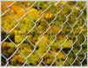 Sale Factory Price High Quality Hot Dipped Galvanized Diamond Wire Mesh Used Chain Link Fence