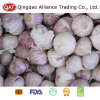 Export Fresh Chinese New Crop Solo Garlic