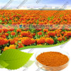 Starch Coated Natural Marigold Extract Lutein with 10% Zeaxanthin
