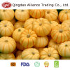 Fresh Whole Pumpkin with Competitive Price