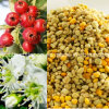 Bee Pollen, Top Pure Wild Hawthorn Bee Pollen, Rare, No Antibiotics, No Pesticides, No Pathogenic Bacteria, Lose Weight, Anticancer, Prolong Life, Health Food