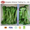 Top Quality Frozen Broccoli Spears