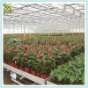 Galvanized Steel Frame Glass Greenhouse