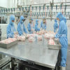 Full Set Chicken Slaughter Production Line
