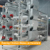 Tianrui Full-automatic Hot Galvanized Baby Chicken Breeding Cage