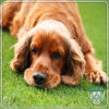 PE+PP Durable Artificial Synthetic Grass for Pet
