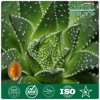GMP Certified Top Quality Natural Aloe Vera Extract Nat-008