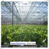 Professional Glass Greenhouse Commercial Green House with Good Cooling System