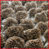 Natural Maitake Mushroom Extract /Grifola Frondosa Extract Polysaccharides