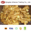 2017 New Crop Ginger with Good Price
