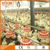 Auto Poultry Farm Machinery for Breeder with Professional Design