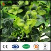 China Supplier High Quality Outdoor Artificial Plants
