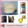 99% Purity Steroid Powder ND Nandrolone Decanoate for Bodybuilding