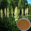 Natural Yucca Extract (30%-60% Saponins)
