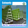 Low Cost High Quality Agricultural Used Hydroponic Greenhouse