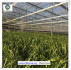 China Low Cost Prefabricated Frame Glass Greenhouse with Hydroponic Systems