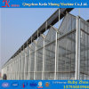 China Factory Price Plastic Film Greenhouse with Hydroponic System