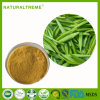 High Quality 50% Green Tea Extract Tea Polyphenols