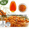 Natural High Quality Sea Buckthorn Seed Oil by Supercritical CO2
