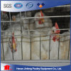 Hot Sell a Type Automatic Broiler Poultry Farming Equipment for Sale in India/Philippines/ Africa