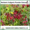 Pharmaceutical and Food Grade Berberis Vulgaris Powder Extract 10: 1