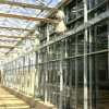 Large Multi-Span Agricultural and Commercial Glass Greenhouse