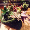 Deco Purse - Fresh Green Moss Basket to Create Your Own Moss Basket Garden.