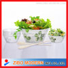 5PC Glass Salad Bowl Set Apple Design (GA9016AC-5)