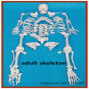 Disarticulated Full Human Skeleton Model, 170cm Tall Adult Skeleton with Skull