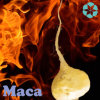 Maca Extract / Lepidium Meyeni Extract