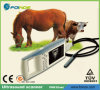 Fn610V Palm Portable Veterinary Ultrasound