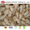 Top Quality Fresh Dry Ginger