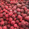 IQF Freezing Organic Blackberry Zl-021
