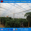 Galvanized Steel Frame Greenhouse Plastic Film Agricultural Greenhouse Tunnel