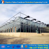 China Factory Glass Hysdroponic Green House for Tomato