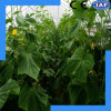 Pressure Resistant Durable Agricultural Equipment Greenhouse