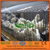Innaer Factory Supply Chick Cages for Chicken Farm (3-5 layers)