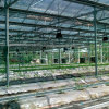 Industrial Glass Greenhouse for Flowers/Vegetable