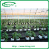 8m span width EM greenhouse for wholesale
