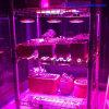 Grow Bulbs 12W PAR38 to Grow Plants Lights
