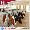 Hot Sale Daily Cow Selflocking Headlock for Cattle Farm