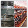 H Type Galvanized Steel Chicken Breeding Cage / Broiler Cage with Automatic System