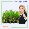 Natural Looking and Touch Fire Resistant Garden Artificial Grass Turf (EMC-TW) for Landscaping Decoration